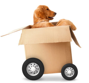 pet-moving-service